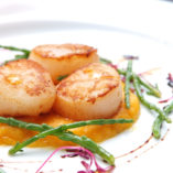 Scallops, creatively arranged food on a white restaurant plate